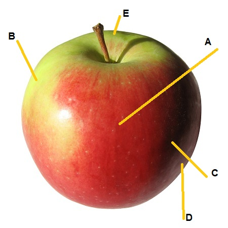 apple-samples.jpg